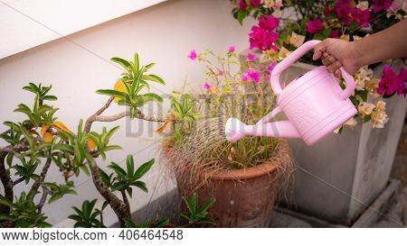 A Human Hand With A Pink Watering Can Watering The Flowers Tree In Front Of The House, In The Pot. D