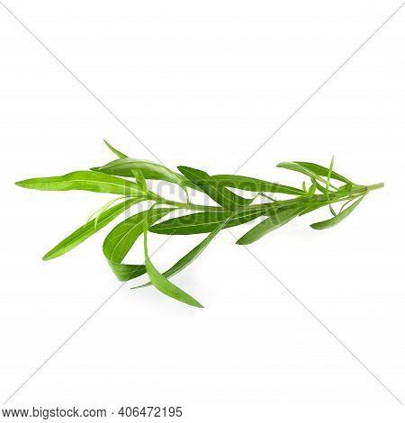 Fresh Tarragon Herbs, Tarragon Herbs Close Up Isolated On White Background.