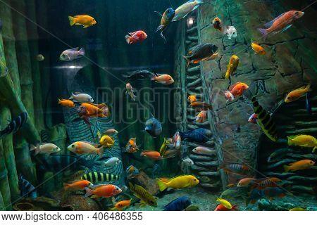 An Aquarium, Interesting Sea Inhabitants, Fish Behind Glass. Undersea World