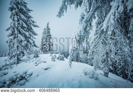 Dramatic view of snow-capped spruces on a frosty day. Location place of Carpathian mountains, Ukraine, Europe. Photo wallpapers. Fabulous nature image. Happy New Year! Discover the beauty of earth.