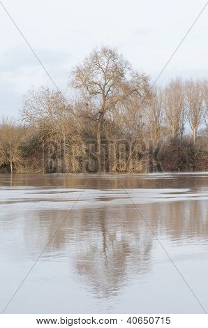 Flooded River And Tree Reflection In France