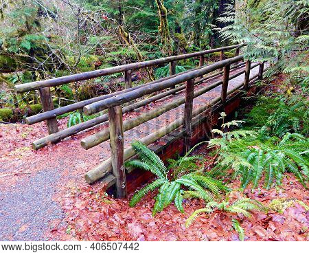 Footbridge To Autumn - A Fall Scene At The Mckenzie River Viewpoint - Along State Hwy. 126 - North O