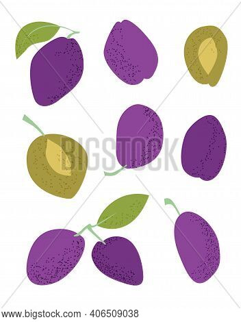 Blue Plums Flat On White Background. Flat Vector Illustration. Autumn Background. Flat Top View. Iso