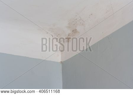 Fungus Mold Close Up Roof Corner Humid. Mold In The Corner Of Wall And Ceiling