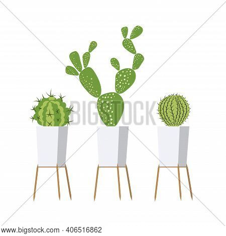 Cactus In The Home Garden. Three Cactus Plants In Beautiful Pots. Plants For Your House.