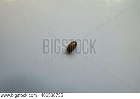 Brown Glossy Softgel Capsule Of Vitamin D3
