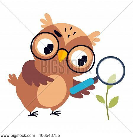 Wise Brown Owl, Cute Bird Teacher Cartoon Character Owl Examining Plant Through Magnifying Glass At