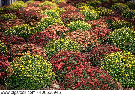 Colorful Flowers In A Corner At Central Park, Manhattan, New York City, New York, Usa.