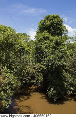 Muddy River Called Sao Lourenco And It's Natural Tropical Vegetation