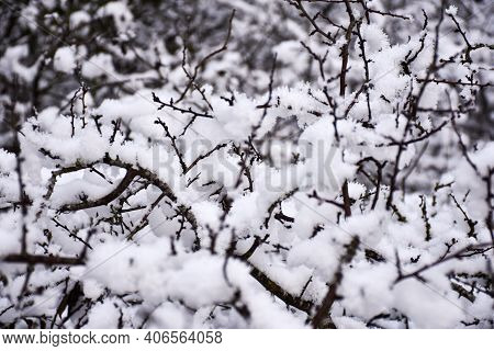 Winter Image With Soft Snow On Tree Branches