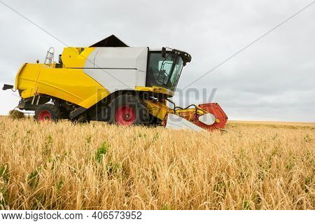 The Combine Harvester Cuts And Threshes The Ears Of Wheat In The Field. Side View. Copy Space.