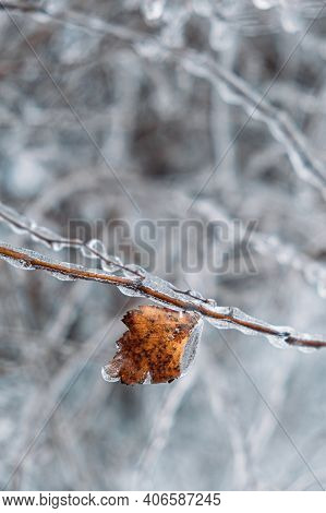Freezing Rain, Icing Hazards. Frozen Tree Branch In Winter City. Icy Tree Branches Close-up. Icing,