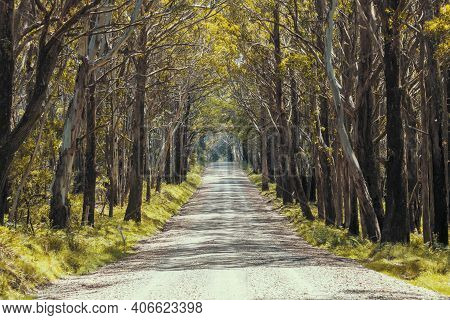 A Long Dirt Road In A Forest Of Overhanging Trees Recovering From Bushfire In Kanangra-boyd National