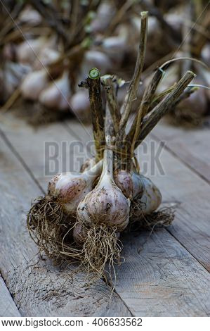 Ripe Garlic Bulbs Lie On A Wooden Surface In The Countryside. Summer Season.