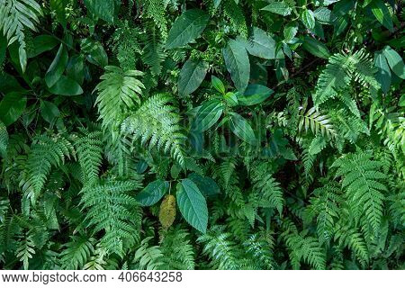 Green Fern And Grass Foliage, Forest Leaf Texture Photo. Wild Nature Floral Background. Fresh Fern F
