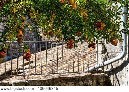 Tree In The Medieval Village Of Vogue In Ardeche, Rhone-alpes, Southern France