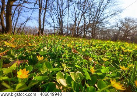 Beautiful woodland landscapes. Spring flowers In the forest.