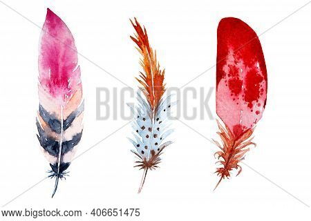 Set Of Watercolor Brown Feathers On White Background. Bird's Feather. Variegated Feather.