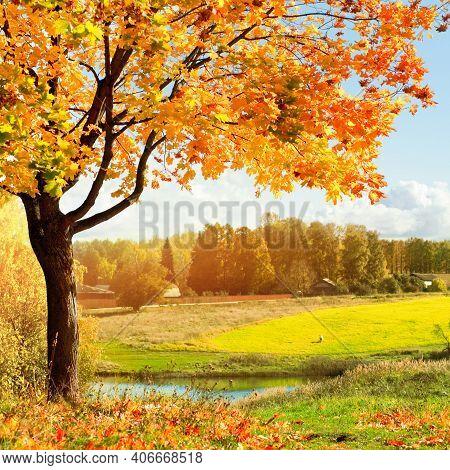 Autumn Sunny Landscape, Autumn Park At Sunrise. Autumn Park Trees And Fallen Lush Autumn Foliage Cov