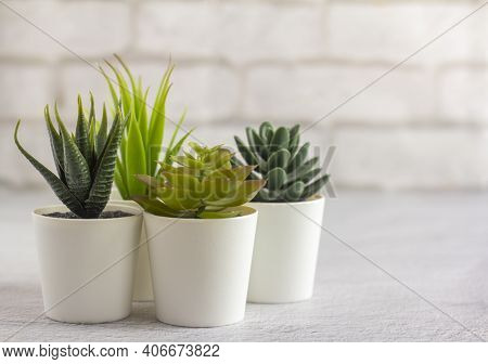 Indoor Plants, Various Succulents In Pots. Succulents In White Mini-pots. Ideas For Home Decoration.