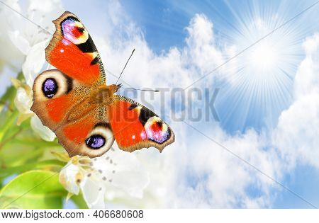 Butterfly. Butterfly Spring Morning Nature Pet Background Nature Animal Grass Nature Background Pet