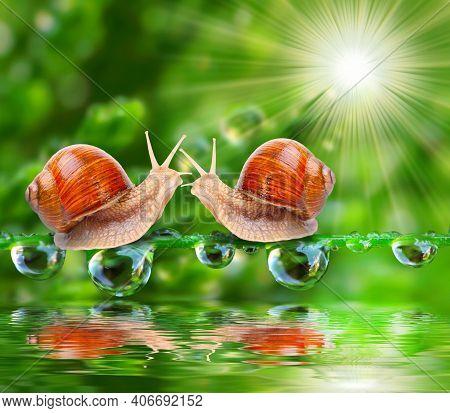 Large Snails In Shells Crawl Over Trunks In Gardens. Burgundy Snail, Helix Pomatia Or Oman Snail, Bu