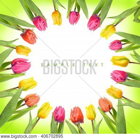 Beautiful Spring Tulips On White Background. Spring Flower Background With Tulips