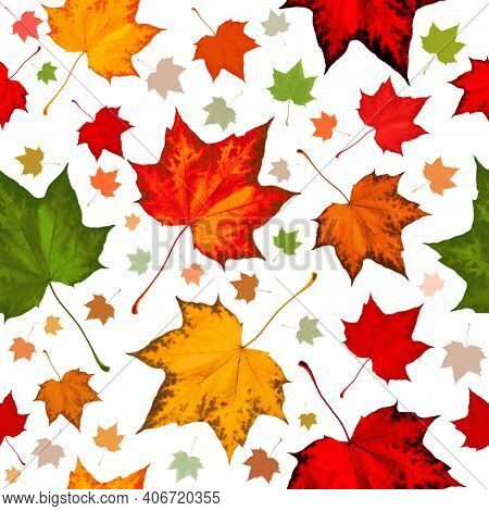 Maple Leaf Seamless Pattern In Orange Red Green Yellow Autumn Fall Leaves. Seamless Background Patte