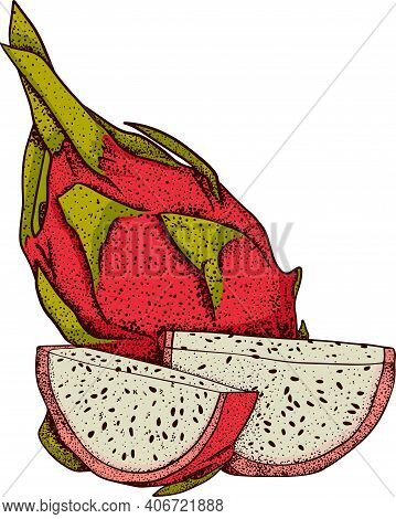 Vector Hand Drawn Set Of Pitaya. Dragon Fruit Illustration. Delicious Tropical Vegetarian Objects. U