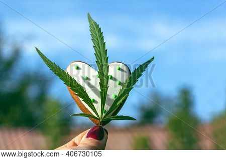 Cannabis Leaf In Hand Against Blue Sky Background. Marijuana Leaf And Gingerbread In The Shape Of A