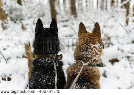 Hunting For Wild Animals With Dogs. Far From Civilization. Hunters Are Walking In Heavy Snow. Forest