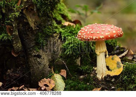 Mushroom Fly In The Forest, Red Toadstool, Food