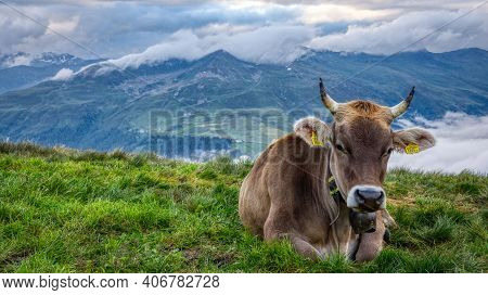Cow On Pasture In The Swiss Mountains Above Daovs, Switzerland. A Storm Is Coming, Graubunden Swiss
