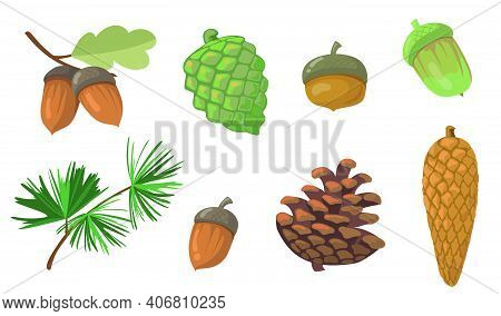 Acorns And Pinecones Set. Pine Tree Branch, Fir Tree Cone, Oak Leaf Isolated On White Background. Fl