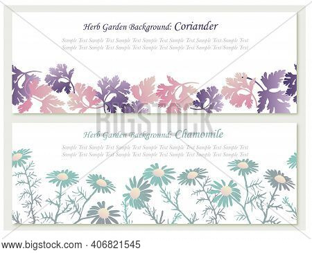 A Set Of Seamless Vector Background Illustrations With Herbs - Coriander And Chamomile. Horizontally