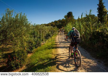 Mountain Bike Cyclist Riding Countryside Track Next To The Olive Groove In Strunjan, Slovenia