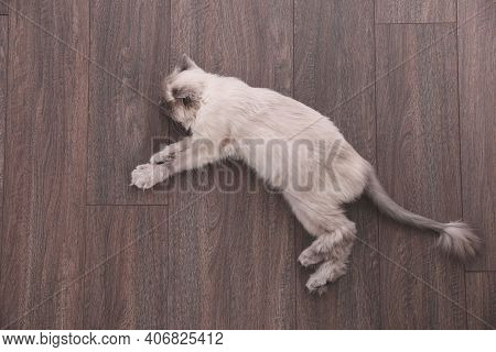 Beautiful Fluffy Cat Lying On Warm Floor In Room, Top View. Heating System