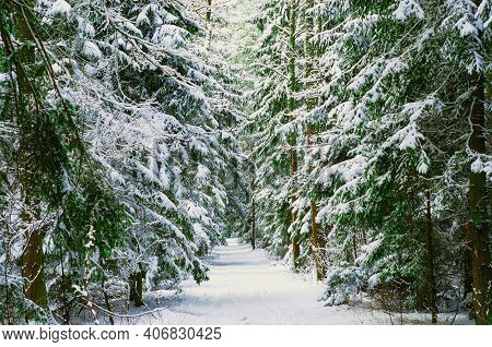 Snow Covered Trees In The Winter Forest With Road. Way Through Frozen Woodland With Snow. Winter Lan