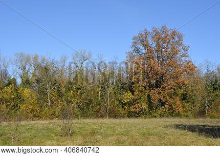 The Autumn Landscape In The Fields Near The Village Of Moimacco Close To Cividale Del Friuli, Udine