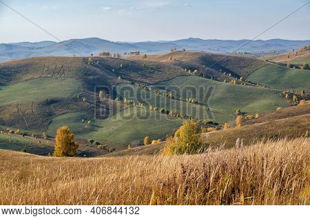 Agricultural Fields In The Siberian Hills, Haymaking. Autumn In The Mountains Of Altai. Yellow Trees