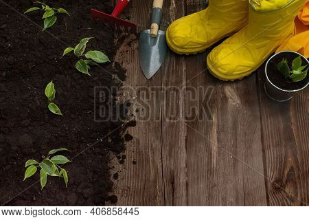 Little Seedling In Black Soil Next To The Garden Rake,shovel And Boots.