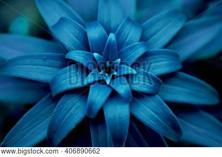 Blue Leaves Background Neon Flower Foliage Wallpaper. Nature Blue Color Flower Leaves In Garden Back
