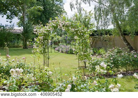 Rose Garden. Large Uk Flower Garden With White Hedge Roses And A Rose Arch