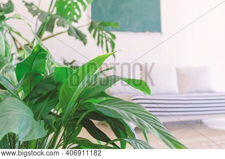 Defocused Room With Sofa, Chalkboard,  Green Plants In The Foreground. Homeschooling In A Cozy Envir