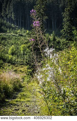 Meadow Flowers, Low Tatras, Slovak Republic. Travel Destination. Hiking Theme.