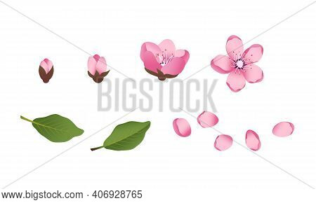 Cute Sakura Flowers Icon Set. The Cherry Have Bloomed. Spring Pink Blooming Composition With Buds An