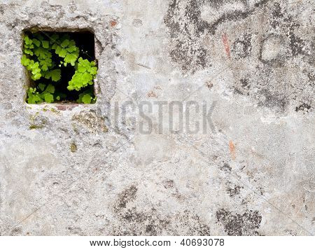 Green Life In The Wall