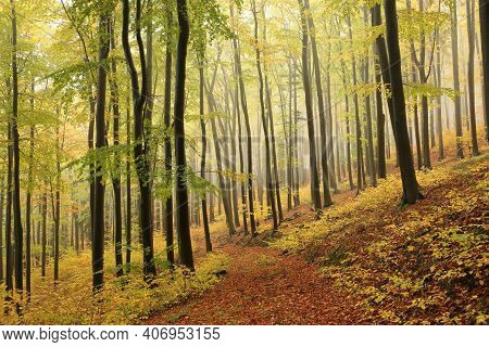 Path trees autumn forest woods Nature landscape Nature landscape Nature background orange Nature landscape trail Nature landscape Nature background landscape Nature background Nature background landscape Nature background season Nature background.