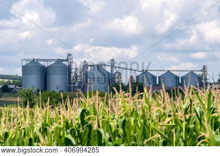 Farm Grain Silos For Agriculture. Storage And Drying Of Grains, Wheat, Sunflower, Corn And Soy.