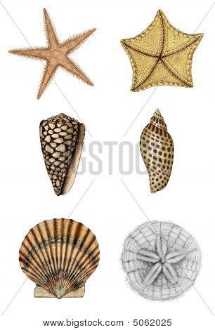 Shell Assortment 2